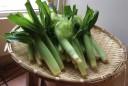 aki young corn